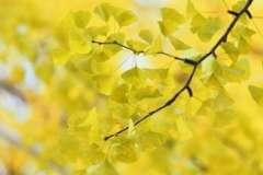 Гусмания. Как выращивать тропическую гостью?
