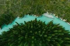 Фотосинтез зеленых организмов